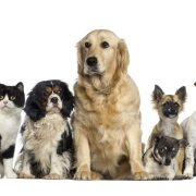 Group of dogs and cats