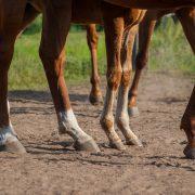 horses' feet