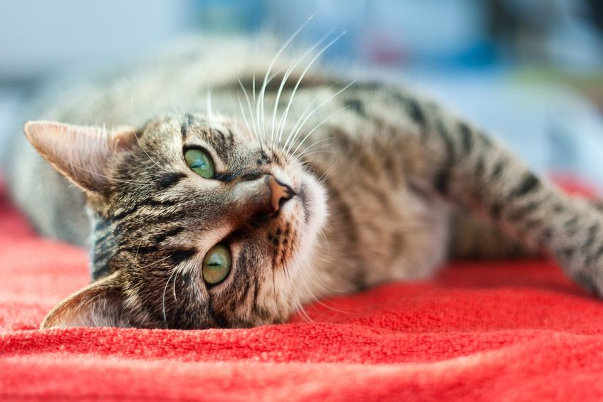 cute cat relaxes and dreams on a bed