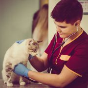 Cat having a check up by a vet in clinic