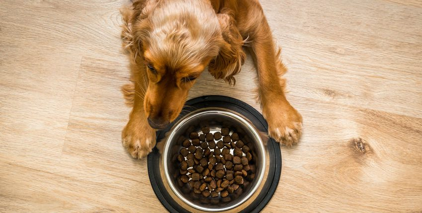 Dog eating from bowl of food