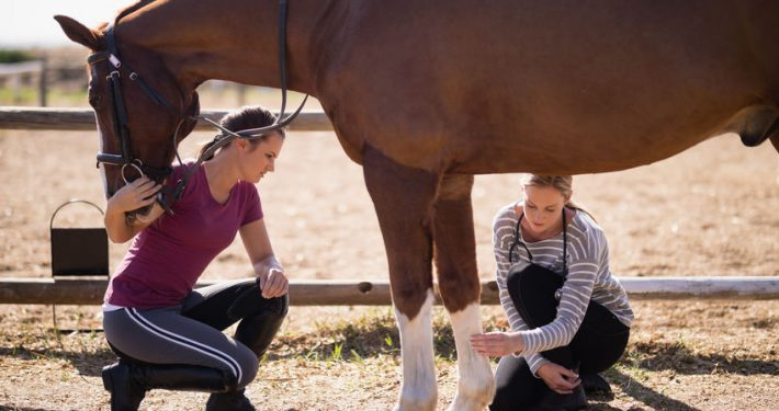 emale vet looking at horse leg in a field