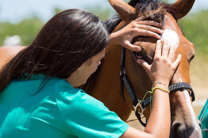 Vet examine horse eye