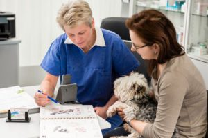 Vet and owner discussing treatment options
